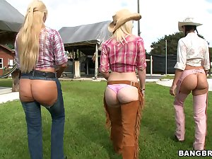 Cowgirls in arse studs gangbang